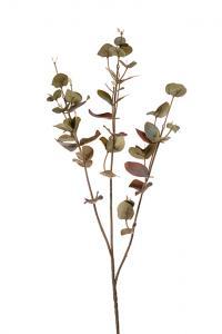 Mr PlantEucalyptus - 70 cm