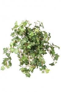 Murgröna - Konstväxt - 45 cm