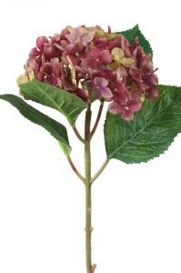 Mr PlantHortensia - Bordeaux sidenblomma - Ø12 cm