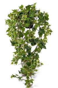 Murgröna - Konstväxt - 85 cm