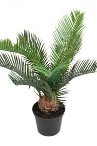 Cycaspalm - Konstväxt - 40 cm