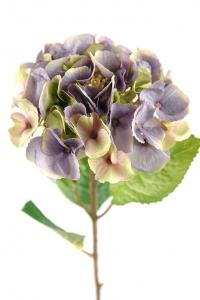 Mr PlantHortensia - Smutslila sidenblomma - Ø18 cm