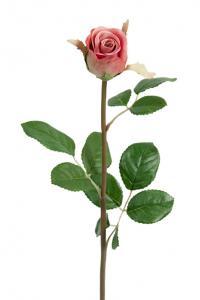 Mr PlantRos - Rosa sidenros - 50 cm