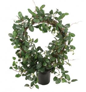 Mr Plant