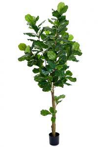 Mr PlantFiolfikus - Konstväxt - 210 cm