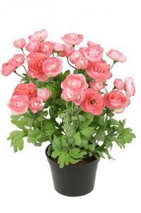 Ranunkel i kruka - Rosa - Konstväxt - 30 cm