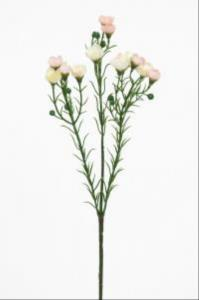 Mr PlantVaxblomma - Ljusrosa/Vit - 40 cm