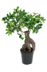 Ginseng - Konstväxt - 50 cm
