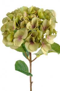 Mr Plant Hortensia - Grönrosa sidenblomma - Ø18 cm