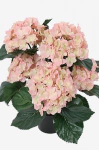 Mr Plant Hortensia - Rosa - 37 cm