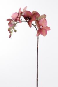 Phalaenopsis - Röd - 60 cm - www.frokenfraken.se