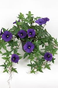 Blomma för dagen - Blå - 45 cm - www.frokenfraken.se