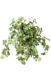 Murgröna - Konstväxt - 40 cm