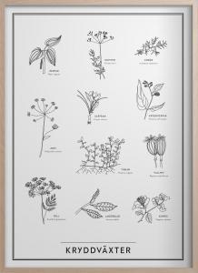 Poster - Kryddväxter - 30 x 40 cm - www.frokenfraken.se