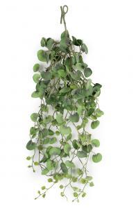 Mr Plant Silverfall - Grön - - www.frokenfraken.se