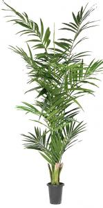 Mr Plant Kentia palm - Konstväxt - 240 cm
