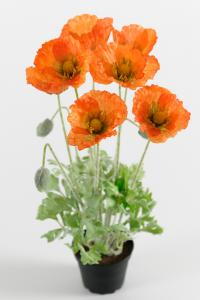 Vallmo - Orange - 40 cm - www.frokenfraken.se