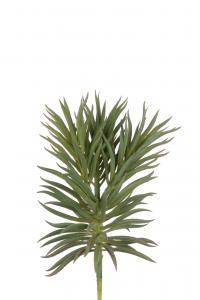 Succulent - Grön - 24 cm - www.frokenfraken.se