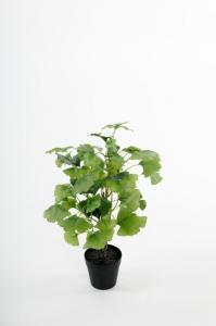 Ginkgo - 45 cm - www.frokenfraken.se