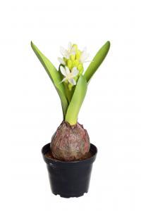 Mr Plant Hyacint - Vit - 22 cm