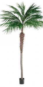 Phoenix Palm - - 300 cm - www.frokenfraken.se