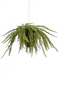 Mr Plant Ormbunke - Grön -