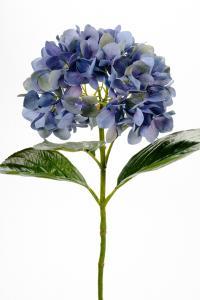 Mr Plant Hortensia - Blå - 65 cm - www.frokenfraken.se