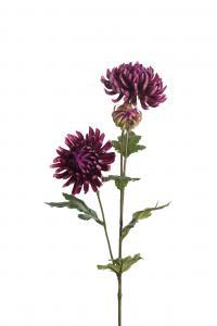 Mr Plant Chrysanthemum - Lila - 60 cm