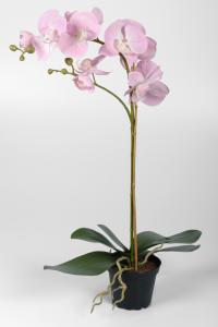 Phalaenopsis - Rosa - 60 cm - www.frokenfraken.se
