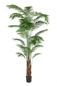 Mr Plant Areca Palm - - 270 cm