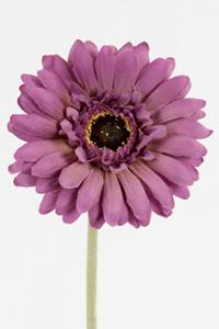 Mr Plant Gerbera - Lila - 55 cm