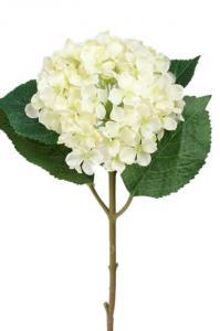 Mr Plant Hortensia - Vit sidenblomma - Ø12 cm