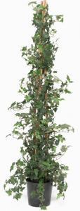 Murgröna - Konstväxt - 160 cm - www.frokenfraken.se