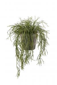 Rhipsalis - Grön - 40 cm - www.frokenfraken.se