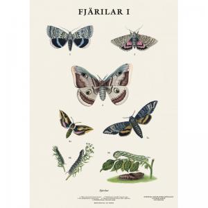 Skolplansch - Fjäril - Liten - 32 x 45 cm - www.frokenfraken.se