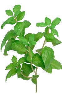 Mr Plant Basilika - Konstgjord på kvist - 38 cm