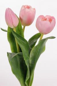 Mr Plant Tulpaner - 3 st - Ljusrosa - 36cm