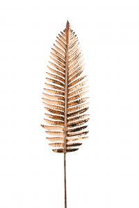 Palm blad - Brun - 95 cm - www.frokenfraken.se