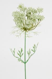 Mr Plant Trachelium - Vit - 45 cm