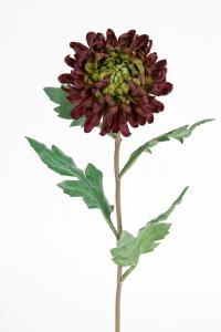 Chrysanthemum - Röd - 60 cm - www.frokenfraken.se