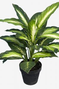 Mr Plant Prickblad - Grön - 48 cm