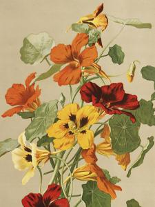 Poster - Vintage - Krasse - 18 x 24 cm - www.frokenfraken.se