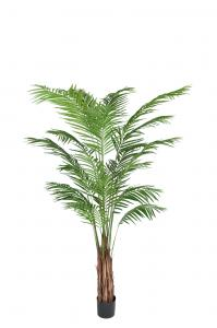 Mr Plant Areca Palm - - 210 cm