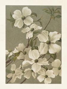 Poster - Vintage - Blomsterkornell - 18 x 24 cm - www.frokenfraken.se