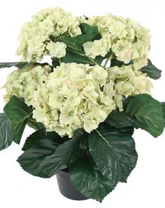 Mr Plant Hortensia - Ljusgrön - 37 cm