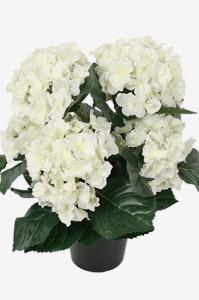 Mr Plant Hortensia - Vit - 37 cm