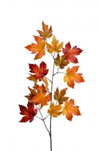 Mr Plant Lönn - 12 st - Orange - 110 cm - www.frokenfraken.se