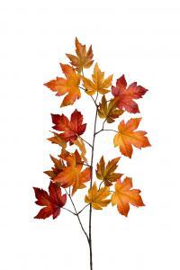 Mr Plant Lönn - 12 st - Orange - 110 cm