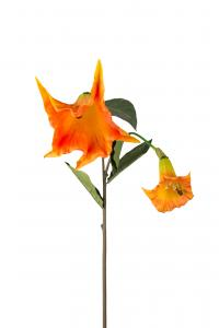 Änglatrumpet - Orange - 90 cm - www.frokenfraken.se
