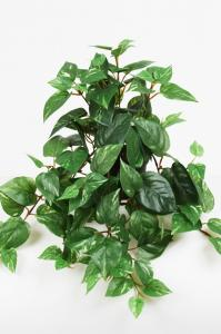 Mr Plant Gullranka - Grön - 25 cm